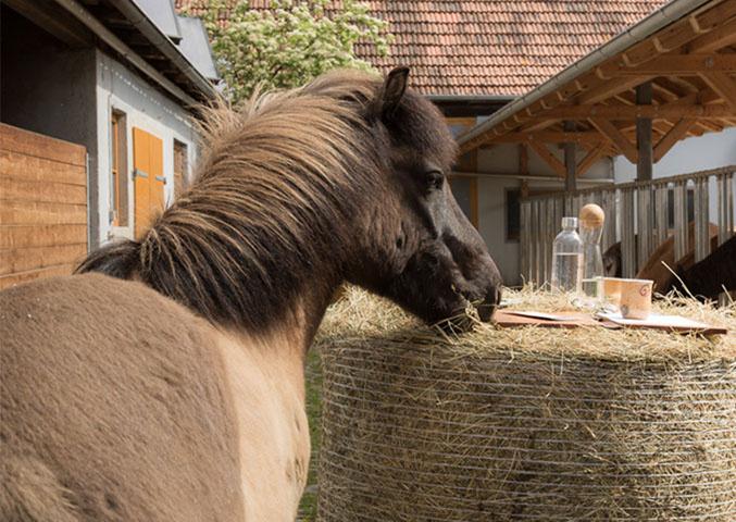 Coaching mit Pferd